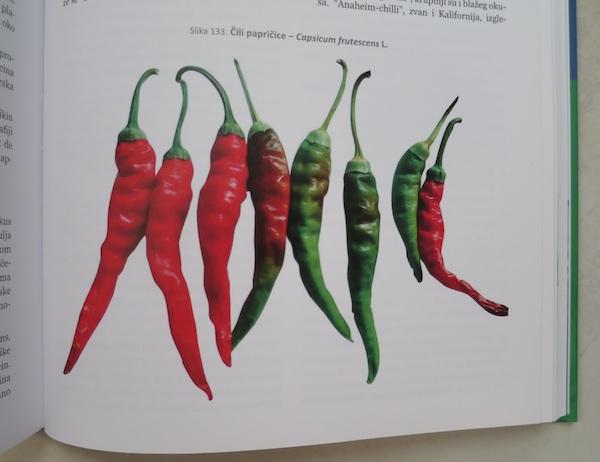 Iz knjige: čili papričica
