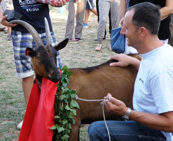 Miss Najkoza Roška sa svojim gazdom Robertom Farbisom iz Kringe (Fotografija Festival sira u Svetvinčentu)