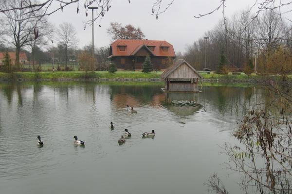 I jato pataka uživa na ribnjaku (Fotografija Božica Brkan / Oblizeki)