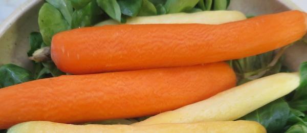 Zdrava sočna mrkva osnova je krasnoga malog jela zacijelu godinu, a osobito zimi (Fotografija Božica Brkan)