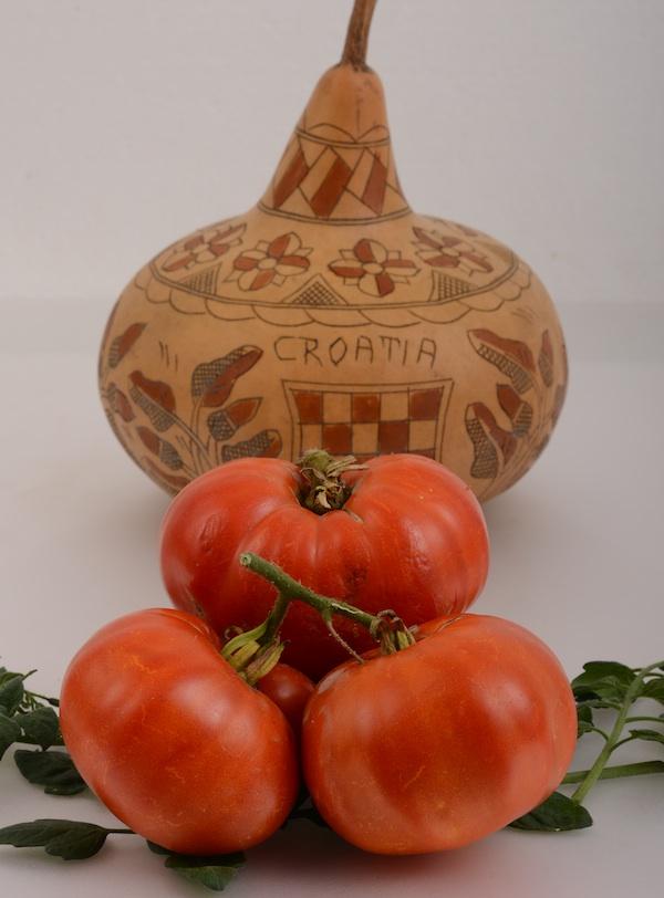Jedina hrvatska sort na ocjenjivanju (Fotografija Brknović/ Oblizeki)