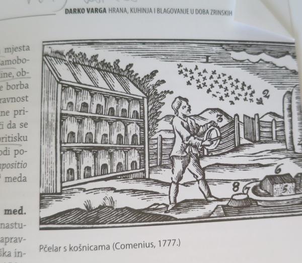 Košnice, ilustracija iz knjige