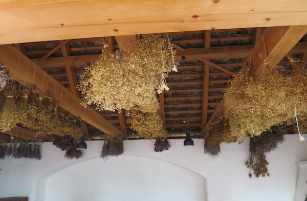 Začinsko se bilje suši u - suši (Fotografija Miljenko Brezak / Oblizeki)