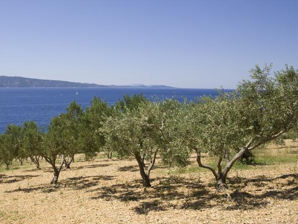 Dio sredozemnoga krajolika