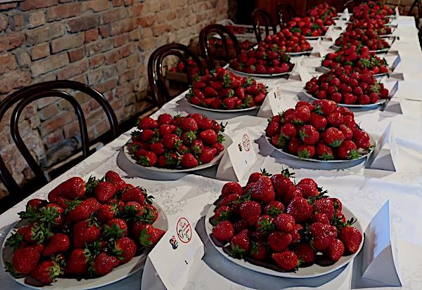Skrivena identite jagode očekuju kušanje ocjenjivačkoga suda (Fotografija Miljenko Brezak / Oblizeki)
