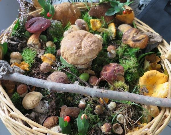 Sepet gljiva ubranih u zagorskim šumama (Fotografija Božica Brkan / Oblizeki)