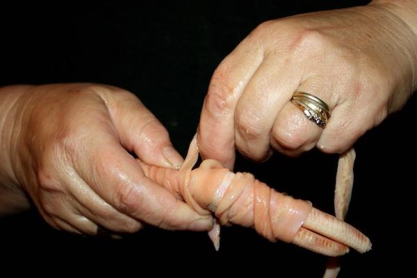 Namatanje gusjih crijeva na gusju drapu za specijalitet - hladetinu (Fotografija Franjo Jagatić / Oblizeki)