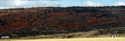 Los marrones del otoño