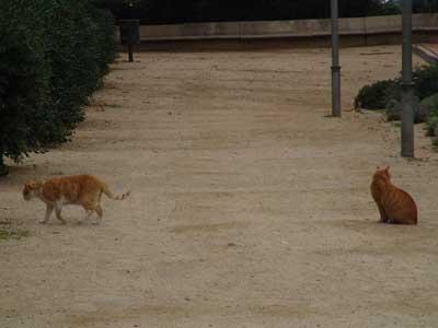 Unos gatos muy separados