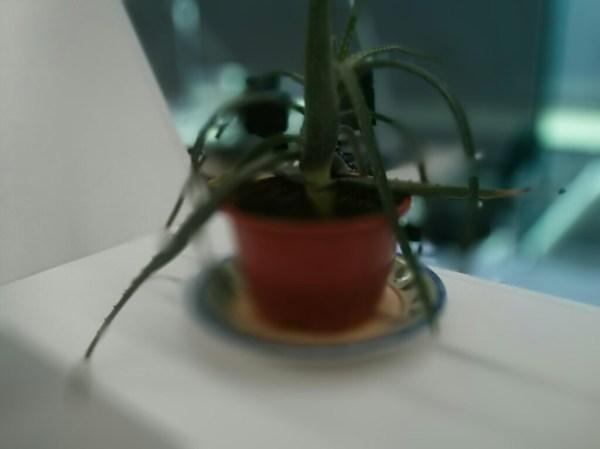 Foto de una planta. El efecto se ha aplicado al máximo. El algoritmo falla, y aplica efectos a partes de la planta que no debería y resulta extraño. La foto es perfectamente reconocible, pero hay cosas extrañas
