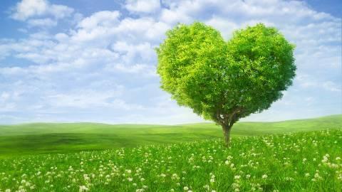 Дерево в виде сердца красивая картинка обои для рабочего стола