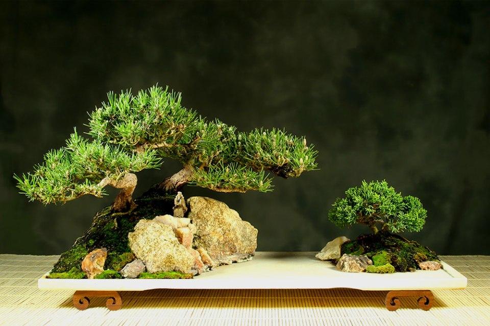 "Bonsai (japonês: 盆栽, bon-sai) significa ""árvore em bandeja"""