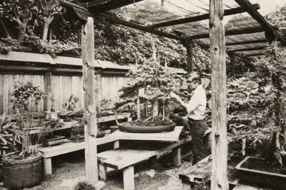 Foto tirada em junho de 1974, quando John Naka era Presidente do California Bonsai Society