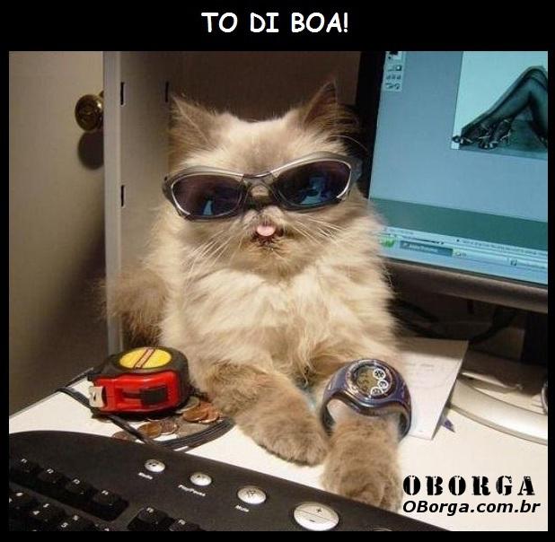 TodiBoa