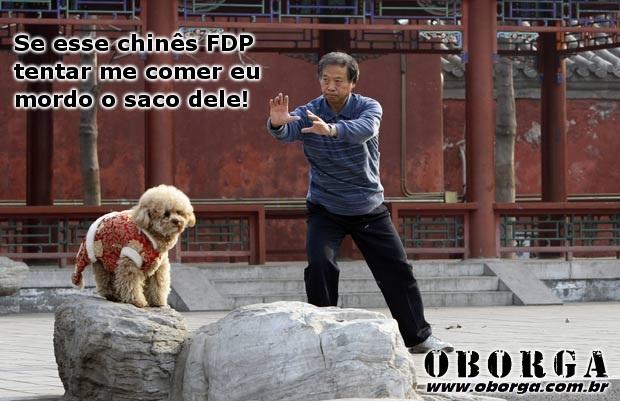 Chines e o Cachorro