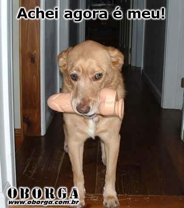 Cachorro Brinquedo
