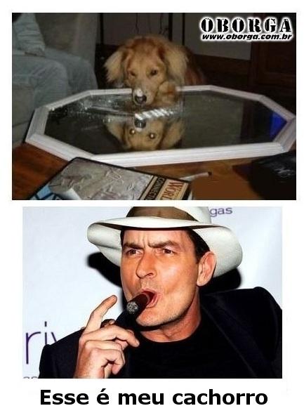 Cachorro do Charlie Sheen
