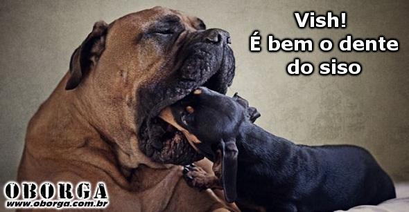 Cão Dentista