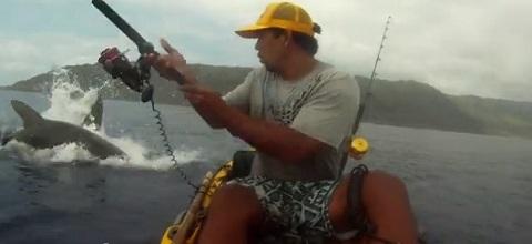 Pescando com tubarões