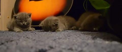 Colocando três gatinhos pra dormir