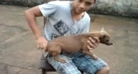 Cachorro movido à corda