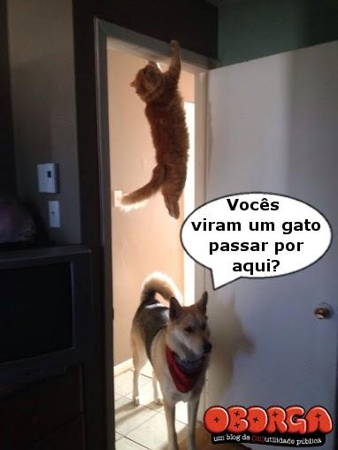 Cadê o gato?
