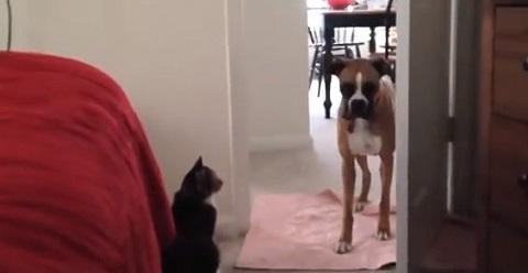 Quem Manda Gato x Cachorro