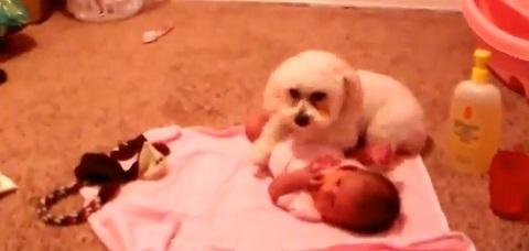 Cães protegendo crianças