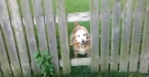 Cães com um pequeno problema