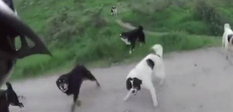 Ciclista é cercado por 25 cães