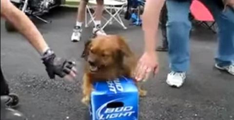 Não mexa na minha cerveja