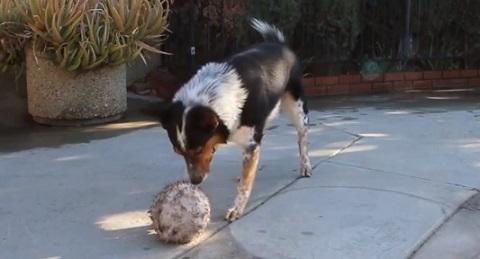 Pense em um cachorro obediente