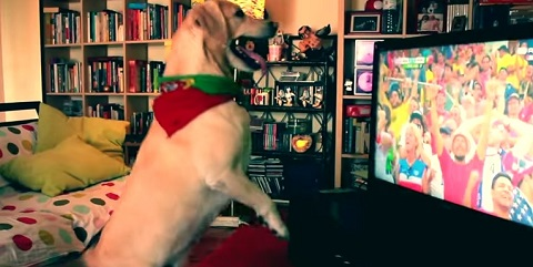 Cachorro torcedor fanático da seleção portuguesa