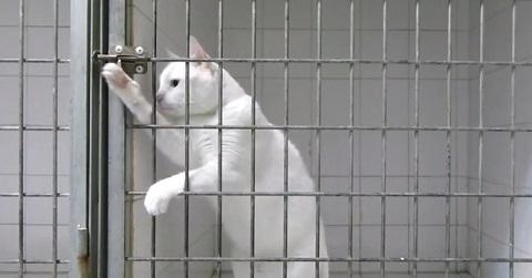 Momento Fofura com Gato Fujão