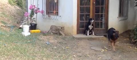 Um corajoso cão de guarda