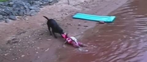O cachorro que queria ser salva-vidas