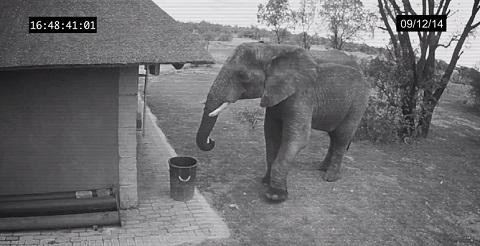 Elefante com TOC