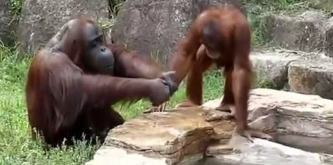 Macaco Esperto