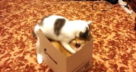 Gatos fazendo gatices #23