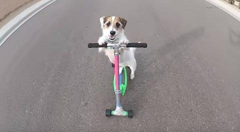 Jesse o cachorrinho mais fofo da internet