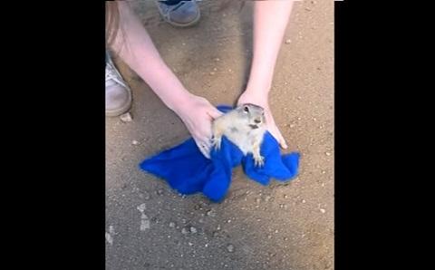 Uma paradinha para salvar o esquilo gorducho