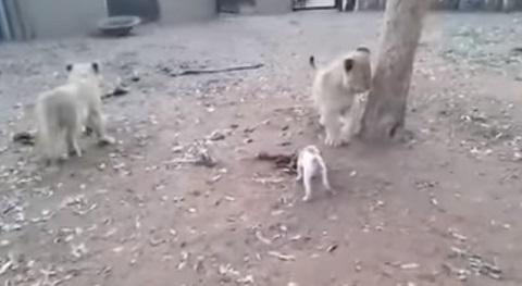 O cachorro mais valente da internet