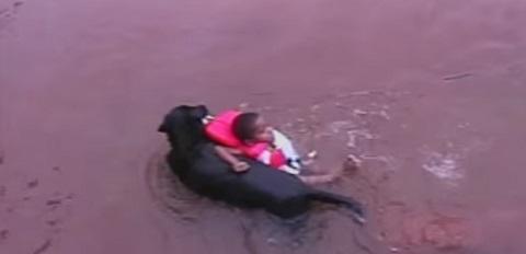 Um cachorro que sonha em ser salva-vidas