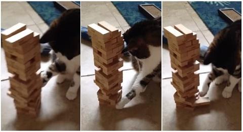 Um gato que joga Jenga melhor que você