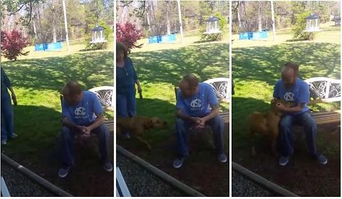 Cachorro quase não reconhece o dono após perder mais de 20 quilos