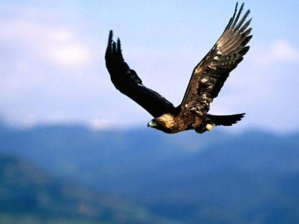 Птицы средней полосы россии фото и названия, 1600x1200