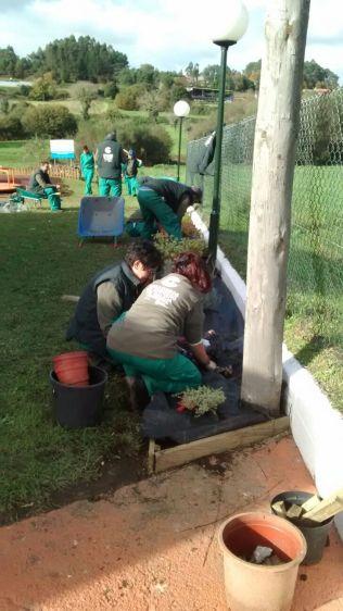 Colocación malla antiherbas e plantación