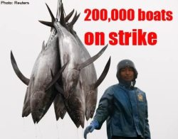 japanfishing.jpg