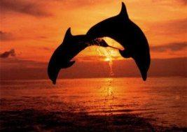dolphinsunset.jpg
