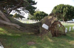 Tree fell Ft Rosecrans 12-15-09